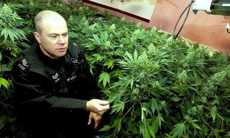 Cops Weed