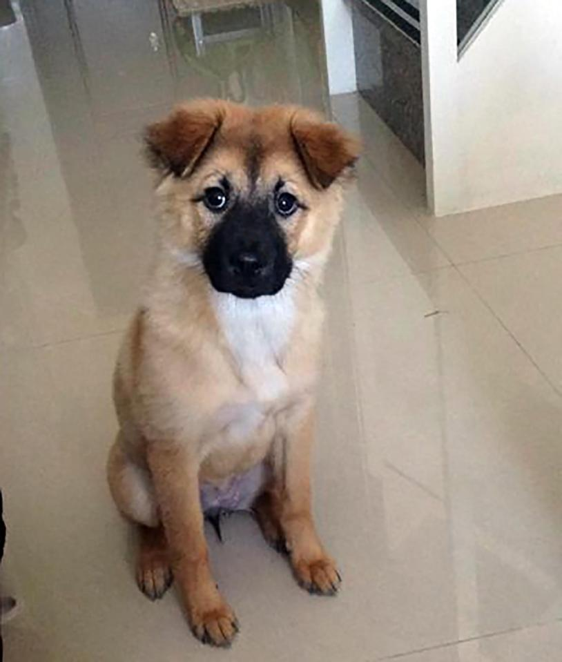 This Traveller\u0027s Trip To The Dog Groomers In China Couldn\u0027t