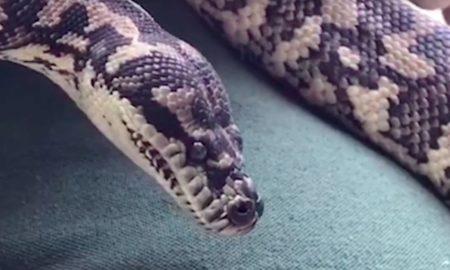 Meth snake