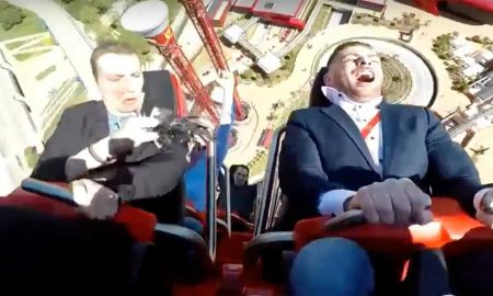 Pigeon rollercoaster