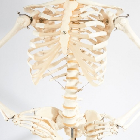 Skeleton Lampshade 4