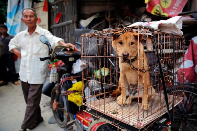 Yulin festival 1