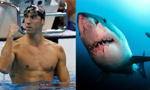 Phelps Great White Shark