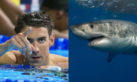 Phelps shark