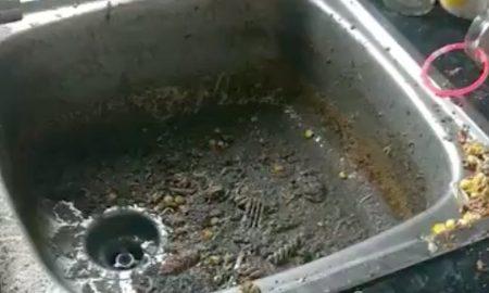Poo in sink