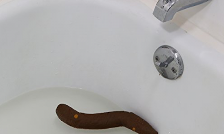Turd In Sink
