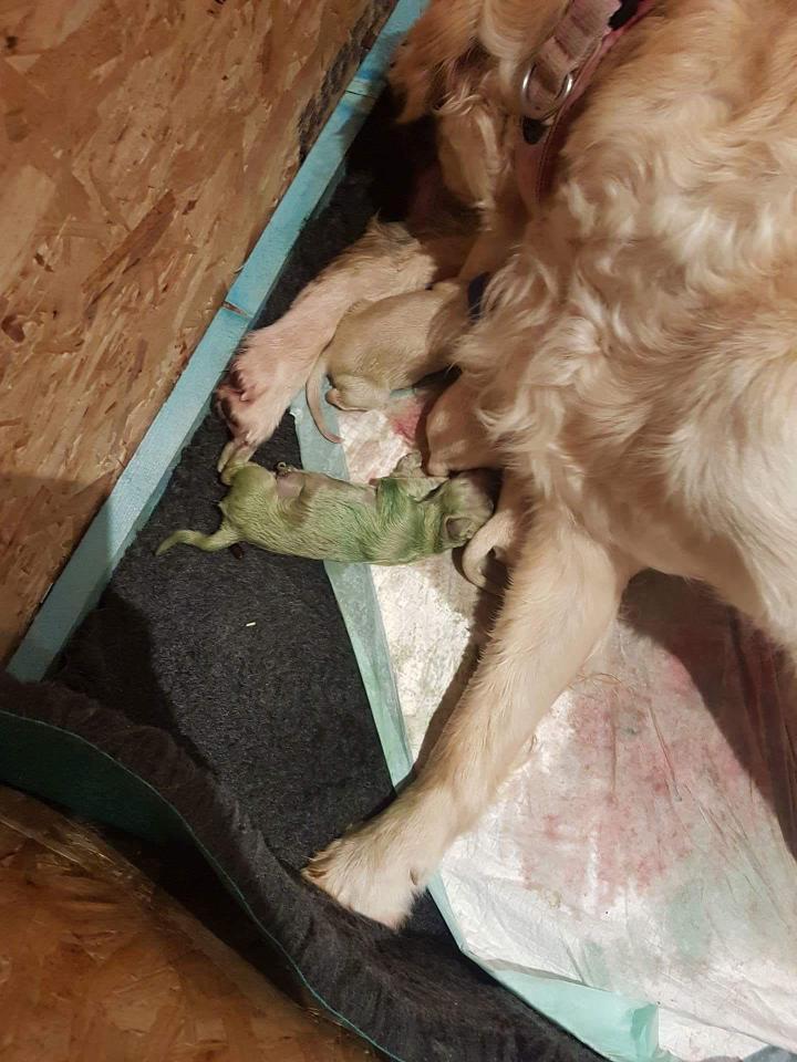 Green puppy 1