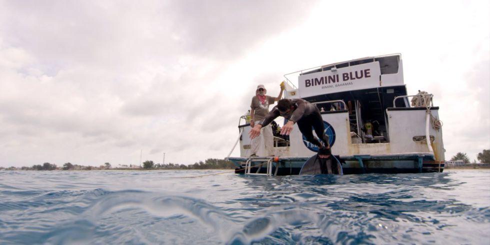 Phelps shark 1