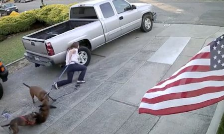 Pitbulls attack cat