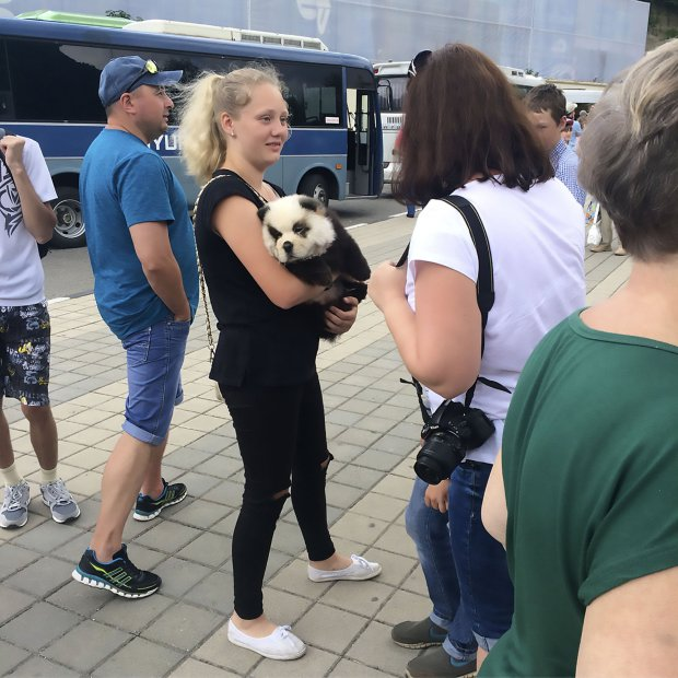 Tourist panda cub