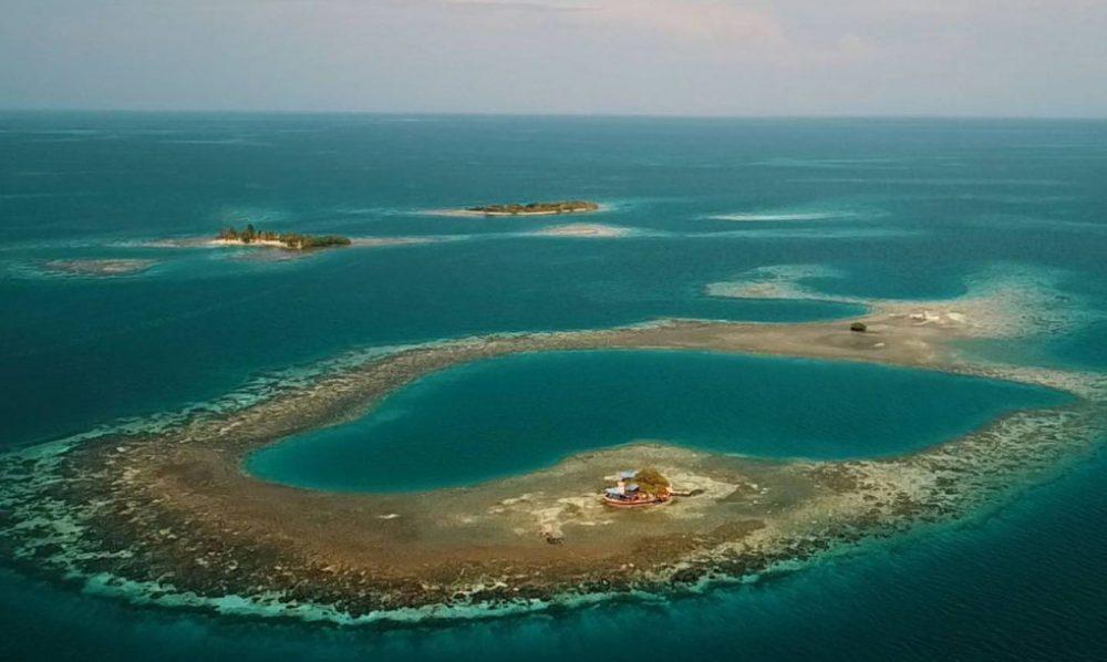 Bird Island 2