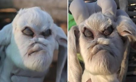 Demonic goat