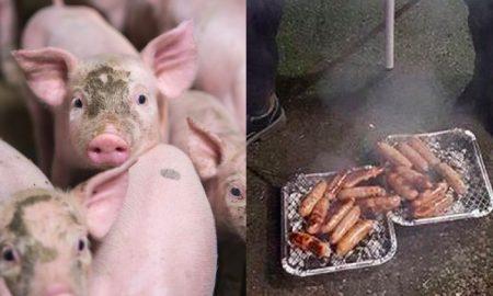 Piglet sausages