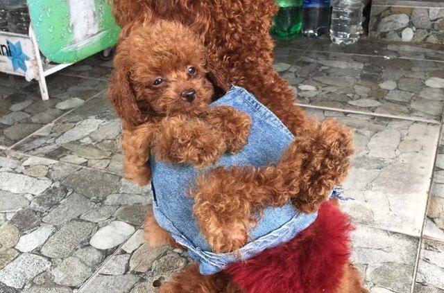 Puppy rucksack