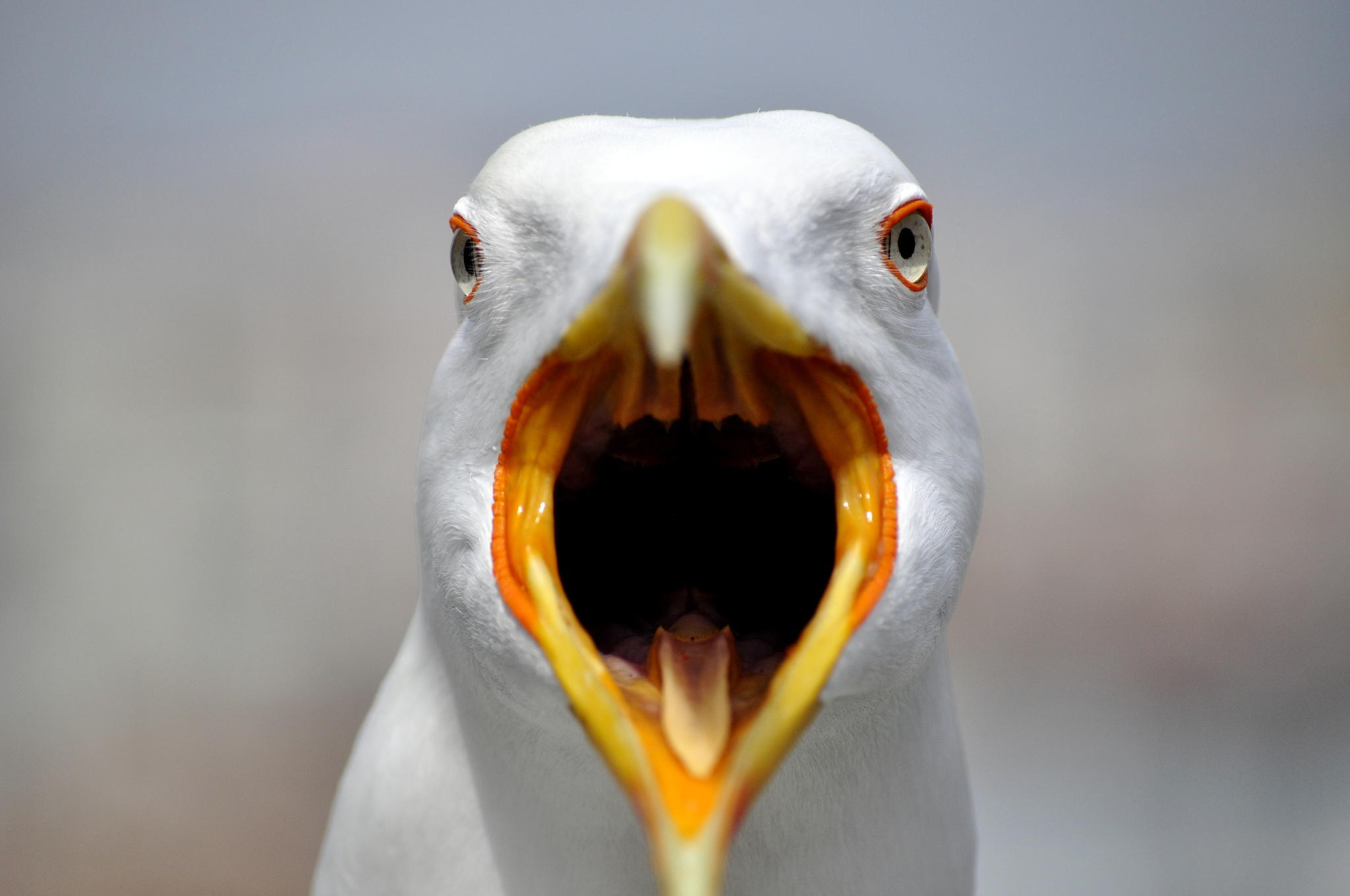 A Seagull Ripped Off A Man S Testicle As He Sunbathed