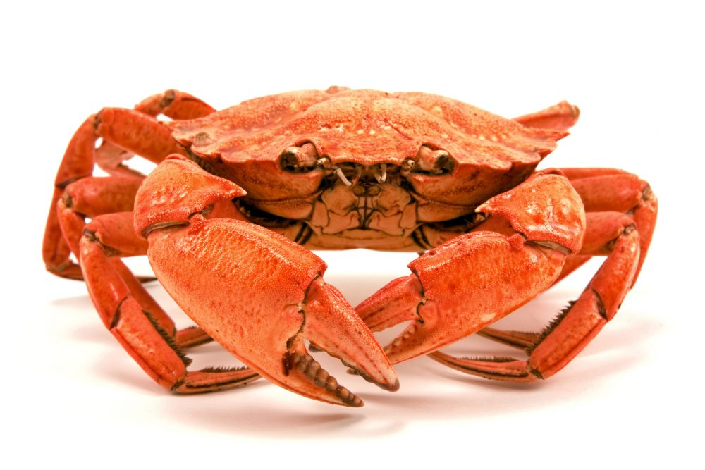 Red boiled crab