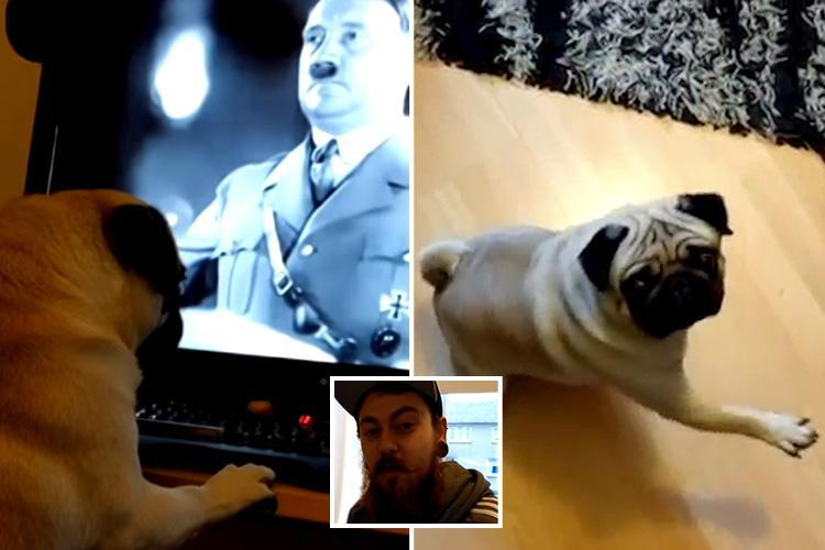 Mark Meechan nazi dog
