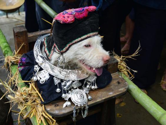 dog-festival-china