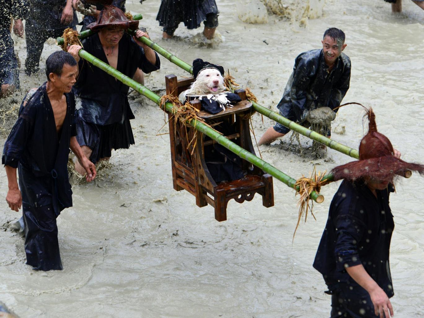 dog-festival-china1