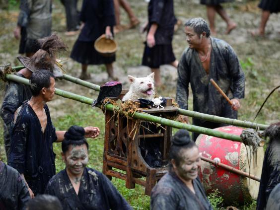 dog-festival-china2