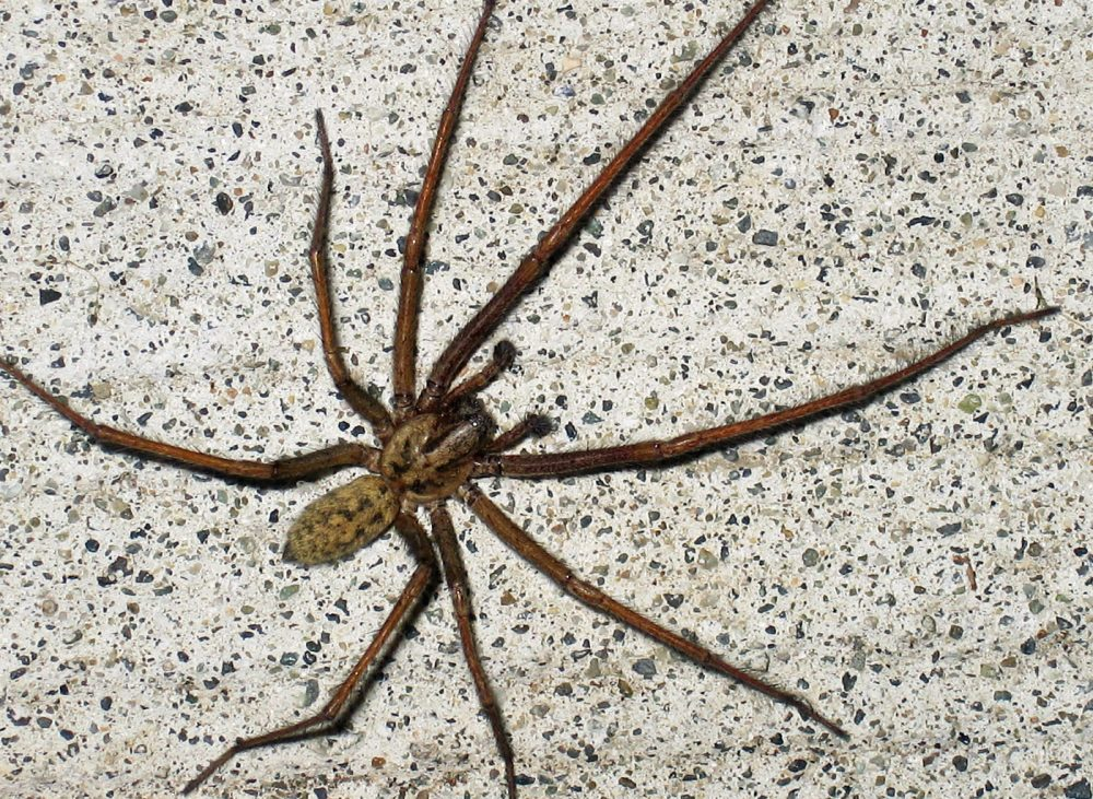 150 million giant horny spiders are set to enter uk homes for How to stop spiders entering your house