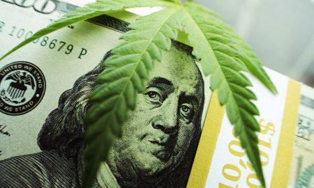 Weed Dealer