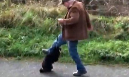 Guy Kicking Dog