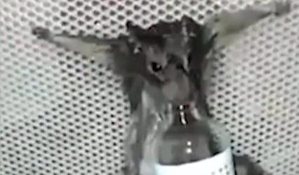 Rat Burned Alive
