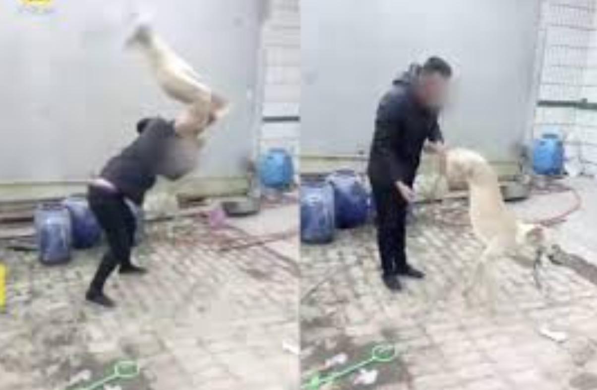 Guy Beats DogGuy Beats Dog