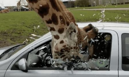 Giraffe Smash