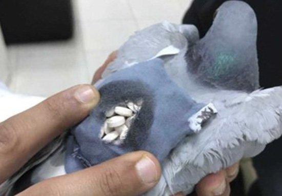 Pigeon Ecstasy