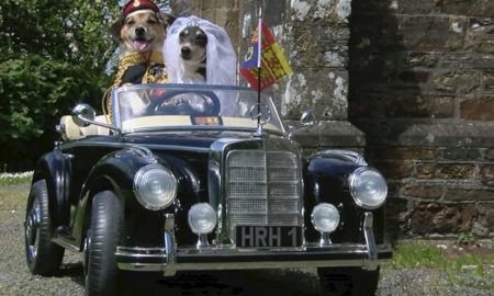 Royal Wedding Dogs
