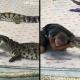 Crocodile Bites Arm