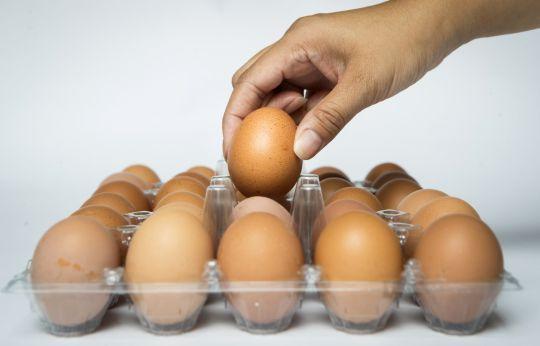 Boiled Eggs 2