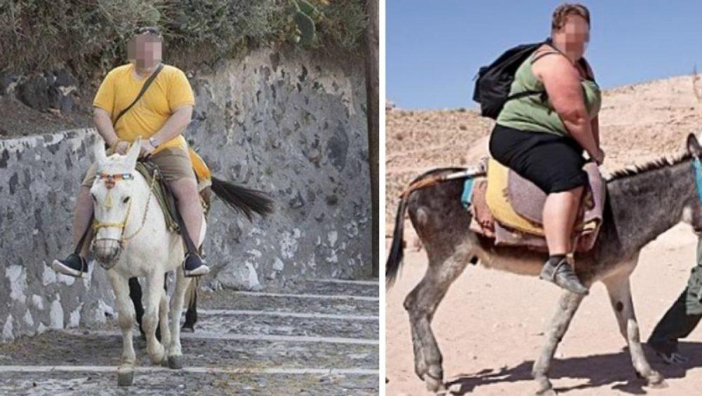 Fat Donkeys