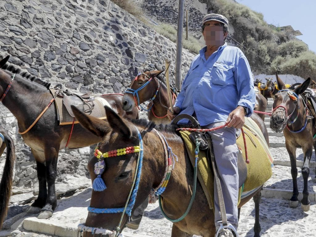 greece is banning obese tourists from riding on donkeys in santorini