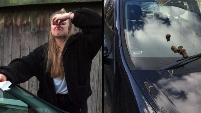 A Student Has Found Human Poop On Her Car For The Second Time In Ten