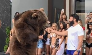 Dan Bilzerian Giant Bear