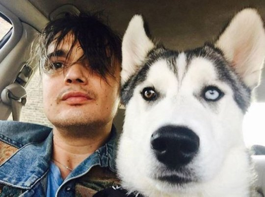 Pete Doherty dogs