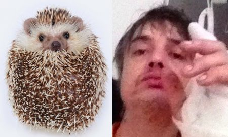 Pete Doherty hedgehog