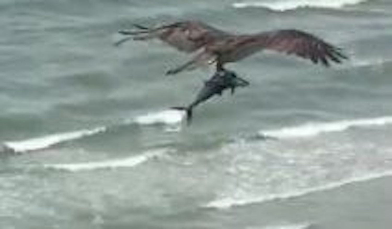 bird carrying shark
